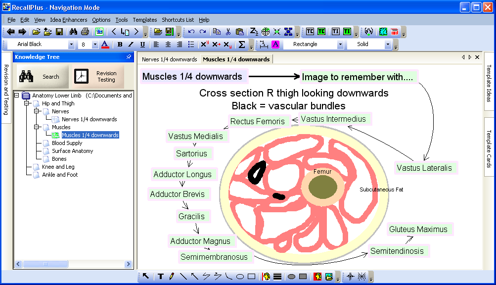 Examples of notes made with the RecallPlus Study Software show how ...
